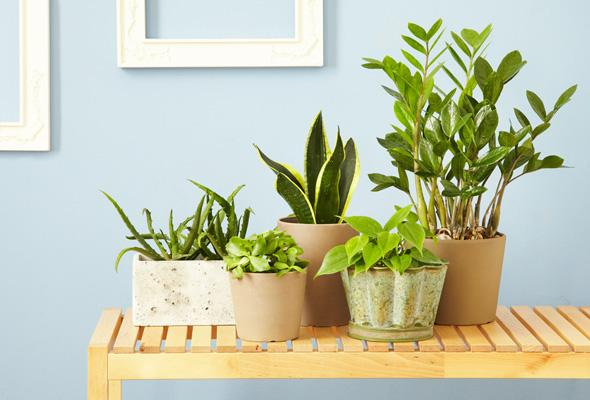 5 Houseplants That Will Improve The Air Quality In Your Home