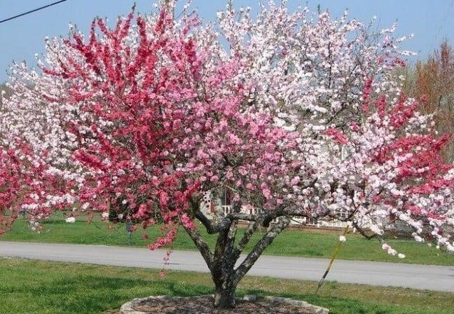 The Amazing Tree of 40 Fruit