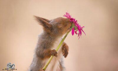 squirrel photos