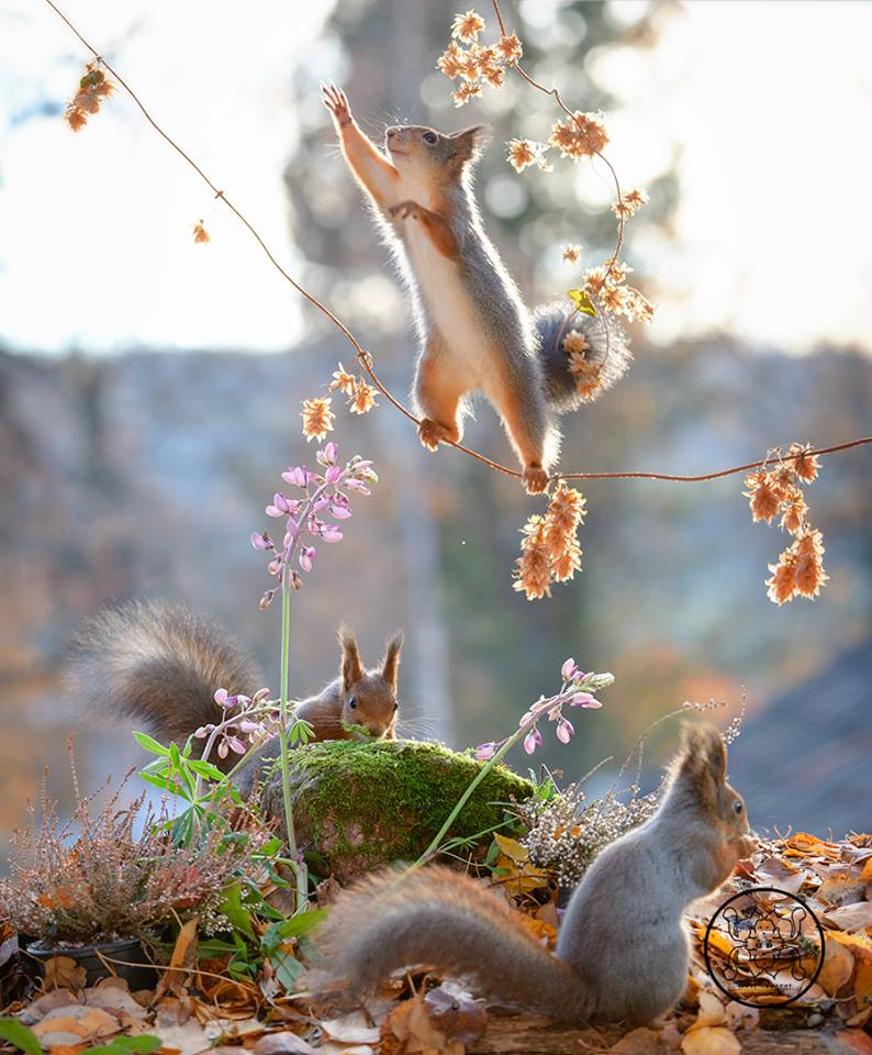 20 Beautiful Photographs Of Squirrels That Will Make You Smile